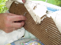 entomologist collecting termites from cardboard monitoring device