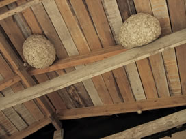 yellowjacket nests hanging from ceiling